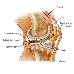 a térdízület kenőcsének artritisz)
