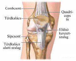 a lábak ízületeinek ínszalagok és inak kezelése