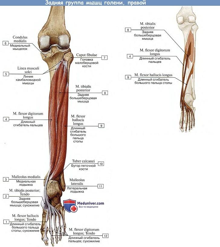 fájdalom a láb metatarsális ízületeiben)