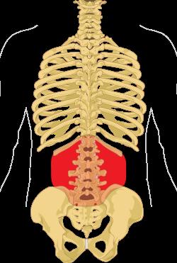 fájdalom a csípőízületben, gerinc oszteokondrozisával)