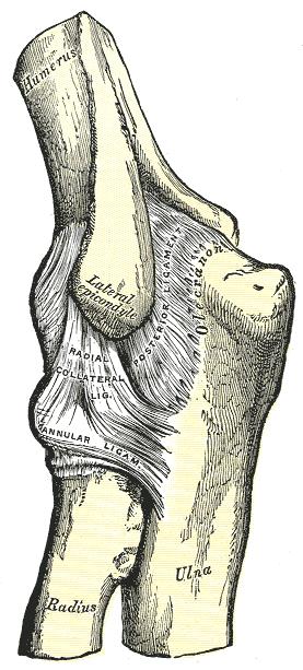 a vállízület fájdalmainak gyakorlása miért fáj a térdízületek edzés közben